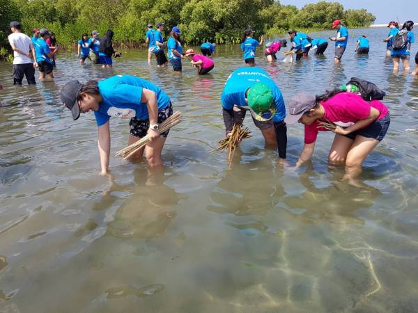 Mangrove tree-planting activity