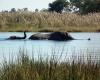 Pom Pom Camp, Okavango Delta, Botswana (©Colin Watts)